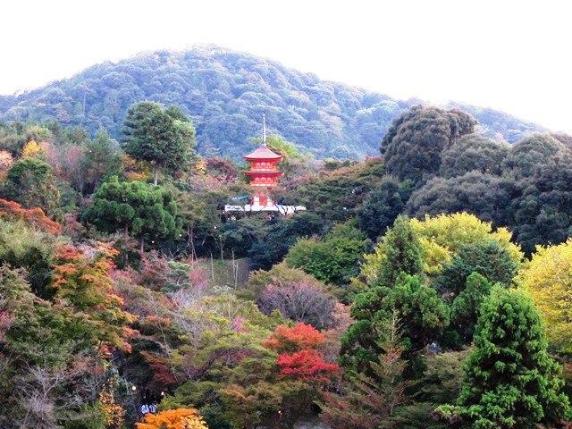 kyoto orman